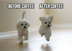 Funny Dogs Memes These little pups say it perfectly ! If you love coffee, check out my coffee art! Dog Quotes Funny, Funny Dogs, Funny Memes, Hilarious, Funny Art, Loyal Dogs, Marriage Humor, Marriage Advice, Morning Humor