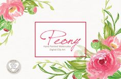 Watercolor Peony flowers by designloverstudio on @creativemarket