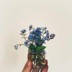 #ihavethisthingfortinyflowers  and these myosotis pickings from the garden are one of my favourites. #forgetmenots self-seed and make themselves at home almost anywhere.  . Happy Tuesday ... hope the sun breaks through to shine on you  . . .  #simplystyledflowers  #stylingmyflowers  #onebouquetperday @onebouquetperday  #seasonalflowers  #myfloralpoetry  #botanicaldaydreams  #foundandforaged . #slowliving_create  #createinspring  #heitermoments . #slowsimpleseasonal  #seasonalsimplicity  #slowand