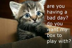 Are you having a bad day? Do you need a box to play with?