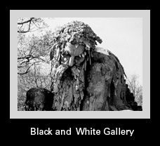 Black and White Gallery dan westfall