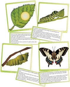 These information cards can be used as free work materials or can be used as … - Education Kindergarten Portfolio, Hand Lettering For Beginners, Us Universities, Insect Crafts, Science Student, Chenille, Hungry Caterpillar, Find A Job, Science And Nature