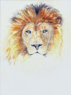 The lion. The king. Colored pencils. A4