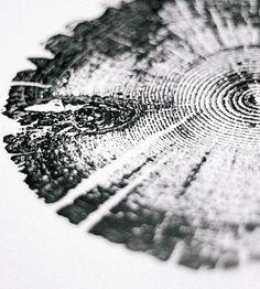 Lodgepole Pine Tree Ring Art Print by LintonArt on Scoutmob