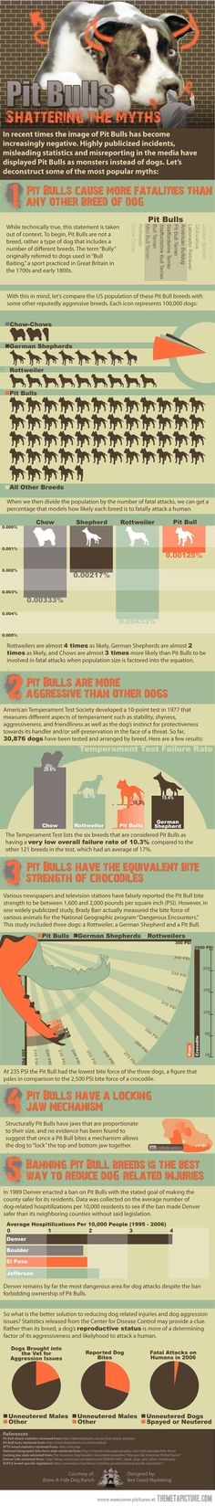 Common myths about Pit Bulls…