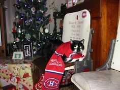 Chat Tricolore portant un foulard des Canadiens, soumis par Norm Coutu/ Habs cat in a Christmas scarf. Submitted by Norm Coutu Christmas Scarf, Guinness World, Holiday, Christmas Cats, Animaux, Scarves, Hunting, Noel, Vacations