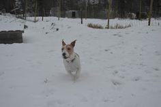 Gårdstunet Hundepensjonat: Flott dag på tunet med flotte hunder!