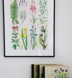 Botanische prints zijn prachtig. Leuk dhz idee van de tuinblogger!