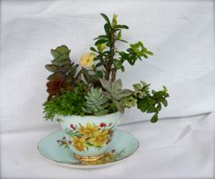 Succulents and Dry Garden Planted in a Teacup by oberryssucculents