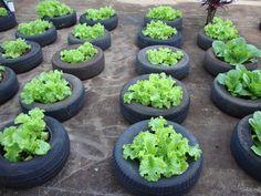 Uma horta montada nas dependências da Escola Estadual Professor Luiz Latorraca, está conscientizando os alunos sobre a preservação do meio ambiente, além de incentivar o conhecimento sobre o planti...