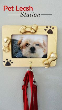 DIY: Pet Leash Station (like bones spray painted & glued to frame)