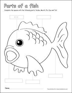 Fish Unit: Fact Pages, Life Cycle, Interactive Notebook