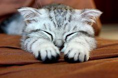 Adoro i gatti nelle loro buffe posizioni..