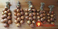 Starý trik, ako skladovať cibuľu: Takto to robili naši predkovia a vydržala im až do ďalšej úrody! August 5th, Onion, Harvest, Dandelions, Massachusetts, Vegetable Garden, Health, Fitness, Health Care