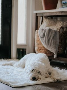 Add a touch of luxury to any room with our plush Polar White Shag Rug.   #washablerugs #petfriendlyrugs #machinewashablerugs