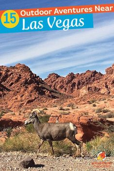 Get off the strip in Las Vegas to connect with nature and the great outdoors with these 15 outdoor adventure activities and things to do near Las Vegas, Nevada. Explore hot springs, hike, bike, visit National Parks, kayak, drive ATVs, go off-roading and even snowboard or ski! These outdoor activities will shake up your next trip to Las Vegas. #lasvegas #nevada #outdoor #southwest #unitedstates