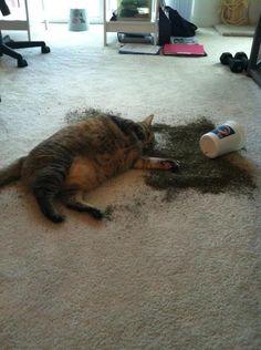 Catnip Problem