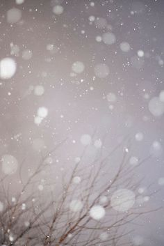 gently falling snow   Great Photography