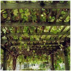 shade (& grapes) in summer, warmth & sunshine in winter!