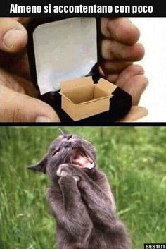 Start the day right! # animal mees # funny memes # cat memes memes animals 17 Funny Animal Memes That'll Make You Roar With Laughter - World's largest collection of cat memes and other animals Funny Animal Memes, Funny Animal Videos, Dog Memes, Cute Funny Animals, Funny Animal Pictures, Funny Cute, Funny Dogs, Funny Memes, Hilarious