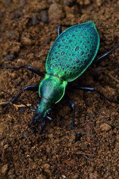 Turquoise Bug - Luca Young-Chul Jang