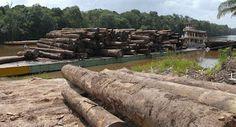 Pregopontocom Tudo: Brasil dá sinais contraditórios em política ambiental...