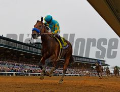 Jockey Victor aboard American Pharoah wins the Breeders' Cup Classic in track record time Oct. 31, 2015 at Keeneland Race Track in Lexington, KY  (Skip Dickstein/Times Union)