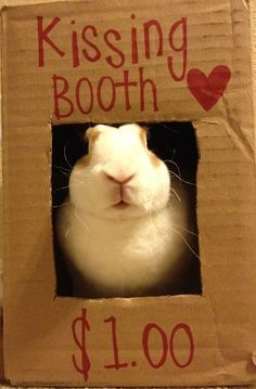 kissing booth. Second Hope Circle helps special needs pets in Ontario find homes through promotion, education and funding! www.secondhopecirle.org