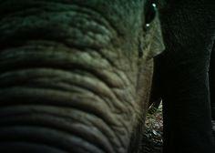 Aditya Gangadharan @AdityaGangadh  2h  I trained a model to automatically identify elephants from camera trap photos. 91-96% classification accuracy, ~6% false positives.