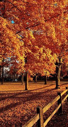beautiful fall....
