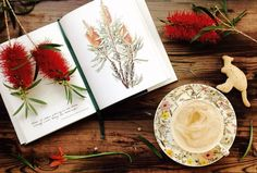 'Flares of colour growing in the black swampy water along the road edges. Callistemon Glaucus (Albany Bottlebrush) Wildflowers in Watercolour - Journal by Phillipa Nikulinsky. . Survived Nature Studies on Friday with one of us almost losing a toddler and only two kids in three families with ant bites 🙌🏻 🐜we were able to identify at least 5 types of flowers by using this lovely #book. The kangaroo biscuit has seen better days, his tail broke, however the kids had fun making them… Watercolor Journal, Watercolour, Ant Bites, Bottlebrush, Better Day, Nature Study, Types Of Flowers, Wildflowers, Ants