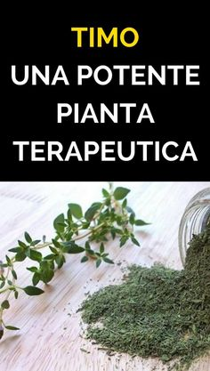 Timo: una potente pianta terapeutica Home Remedies, Natural Remedies, Healthy Lifestyle Tips, Medicinal Plants, Kraut, Health And Wellbeing, Botany, Natural Health, Health Tips