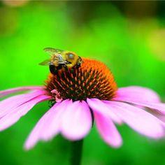 En İyi Çiçek Fotoğrafları İçin Makro İpuçları