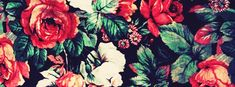 Rose Paintings Facebook Cover Photo | JUSTBESTCOVERS
