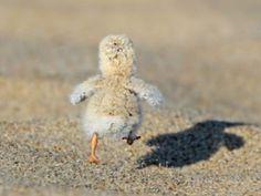 Corre, pequeño, correeee