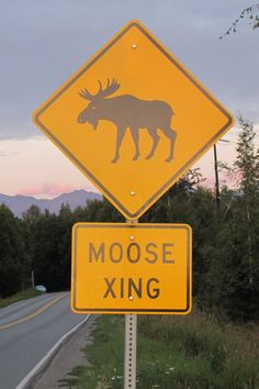 Moose Crossing. I here they are everywhere in Alaska.  Can't wait to have a moose in my yard.
