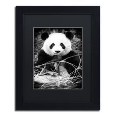"Trademark Art ""Panda"" by Philippe Hugonnard Framed Photographic Print Matte Color: Black, Size: 20"" H x 16"" W x 0.5"" D"