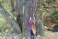 Daniela999 / Aj tu čarovala Trunks, Plants, Drift Wood, Tree Trunks, Plant, Planets