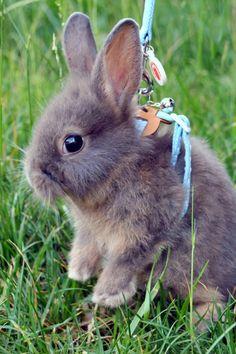 I want a pet Bunny soo bad!