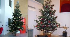 Live Christmas trees and artificial Christmas trees| office Christmas decorations by Green Team Interiors | based in Petersfield, Hampshire