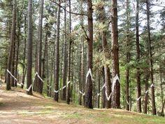 Comuna de Icaria: El bosque pintado de Agustín Ibarrola