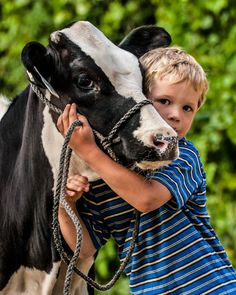 March 13, 2014 - Boy and His Calf - Holstein Heifer Calf  2014@Barbara O'Brien Photography