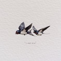 Day 123 : Barn Swallows | Hirundo Rustica. 34 x 15 mm. (for @quinb1 and @mizztbell, from @ninalevim and Mischa). #365postcardsforants #miniature #watercolour #barnswallows #capetown #birds #claireandquinswedding
