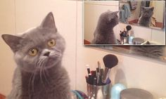Curious cat can't help but admire his own reflection #DailyMail