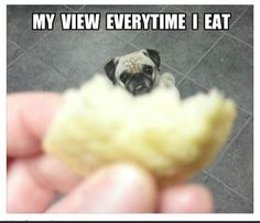 Life with dogs... lol