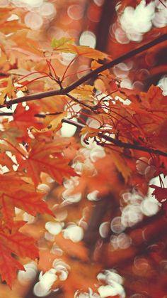 Beautiful autumn maple leaves Galaxy S6 Wallpaper