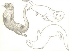 Otter Swimming Drawing | DrawingSomeone.com