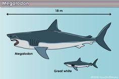 RENOVAÇÃO: World's Biggest Shark EVER! Megalodon...Maior Mega...