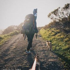 It's not just dogs who enjoy long walks with their owners as@julesybeanify proves in this adorable shot