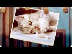 Best Cute Kittens TOP 10  : Cute Cats Kittens Compilation 2015 New  MORE VIDEOS HERE https://www.youtube.com/watch?v=InDJc2L_5dA&list=PLC_HjotBFMpNqd0u6cYK0NtHBXcOIEEoD   SUBSCRIBE: http://www.youtube.com/user/TheFederic777?sub_confirmation=1   #Kittens #Cats #CuteKittens